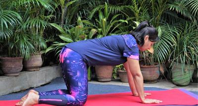 yoga asanas for beginners  yo fit